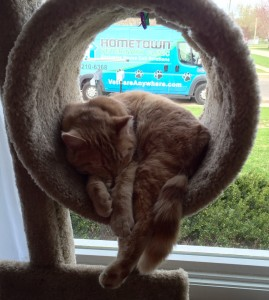 Lilo, a sleeping, content cat in a cat tree.